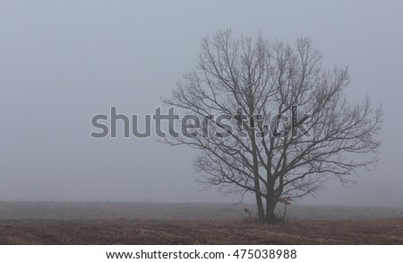 Deciduous lonely tree in late fall misty morning,Poland Europe