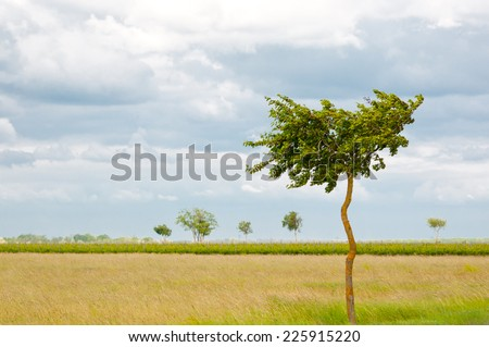 deciduous tree in a rural landscape - stock photo