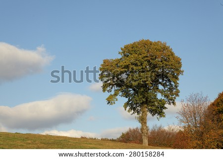 Deciduous tree in autumn, Lower Saxony, Germany, Europe - stock photo
