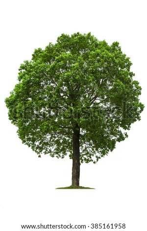 Deciduous Trees Stock Images Royalty Free Images