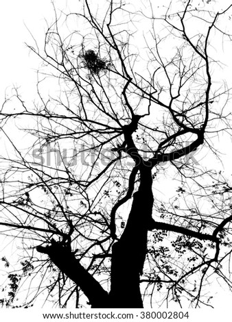 Deciduous trees and sky in black and white mode