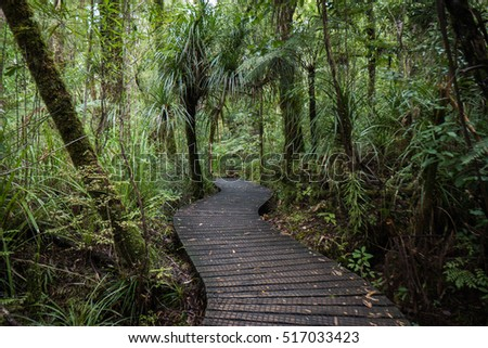 Deck pathway in Waipuoa rain forest, New Zealand