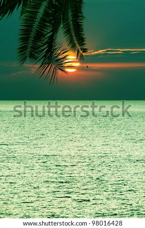 Decline in tropics against the sea - stock photo