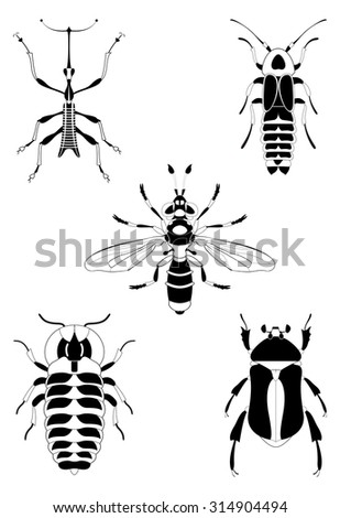 Decor insect illustration collection for design - stock photo