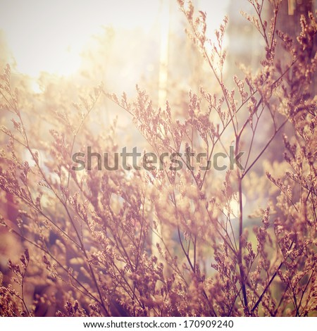 Decoration dried flowers with retro instagram filter effect - stock photo
