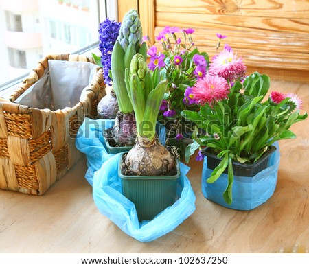 Decoration of balcony hyacinths and primrose - stock photo