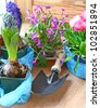 Decoration of balcony hyacinths, bellis and primrose  - stock photo