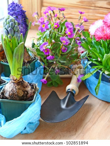 Decoration of balcony hyacinths, bellis and primrose Spring flowers on a balcony - stock photo