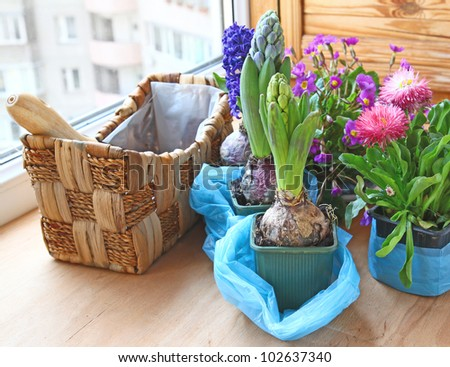 Decoration of balcony hyacinths, marguerites and primrose - stock photo