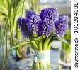 decoration of dining table.  bouquet of blue  hyacinth in vase of glass. - stock photo