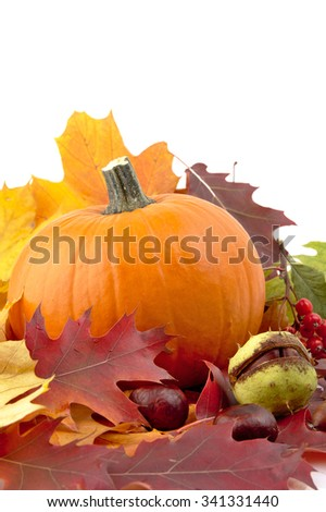 Decoration of pumpkin for thanksgiving day with autumn leaves isolated on white background