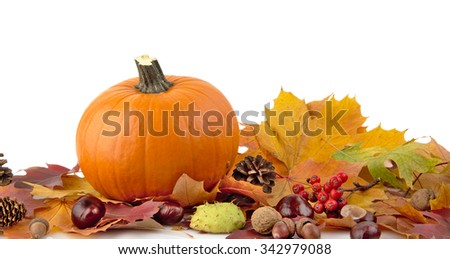Decoration of pumpkin for thanksgiving day with autumn leaves on white background at the bottom view