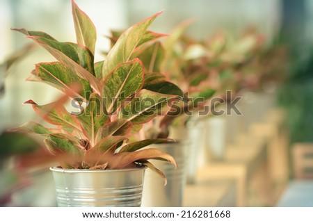 Decoration plants arranged on the row of jar vintage retro - stock photo