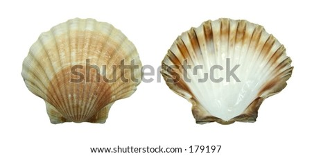 Decoration: shell