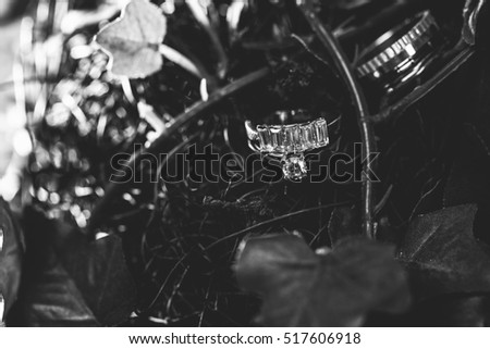 Decoration Wedding rings in the nature flowers with greens, shallow focus, abstract wedding new year 207, xmas engagement, black and white