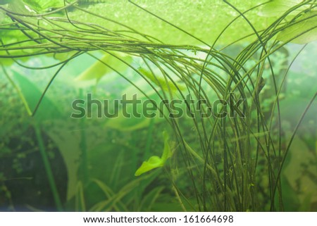 Decorative aquarium plants and  water lily - stock photo