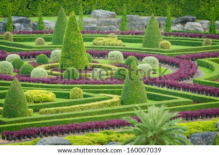 Decorative Beautiful Ornamental Plants Tree Tropical Landscape In Nature  Garden View At Pattaya, Thailand