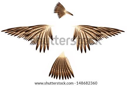 Decorative bird feather. - stock photo