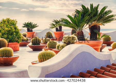 decorative cactus garden on roof near sea, Ischia Island