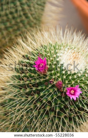 decorative cactus plants - stock photo