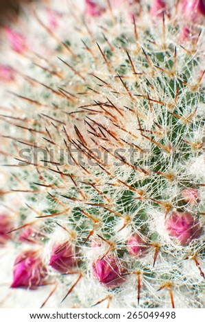 Decorative cactus with flower buds. - stock photo