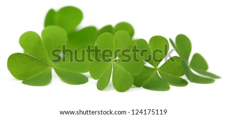 Decorative Clover leaves