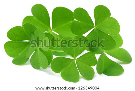 Decorative clover leaves over white background - stock photo