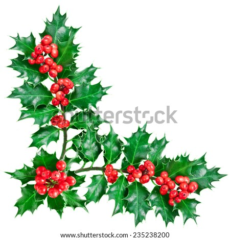 Decorative corner with Christmas holly plant with berries. - stock photo