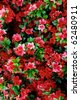 decorative flowerbed - stock photo