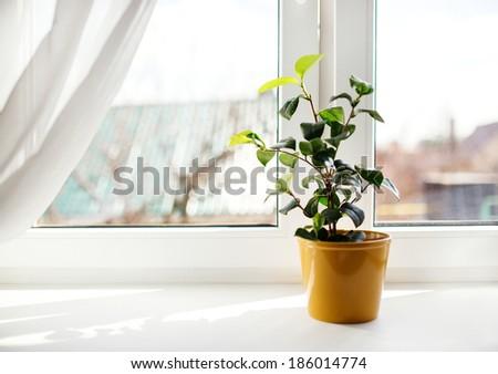 Decorative flowers in flowerpot on windowsill - stock photo