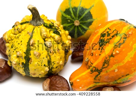 decorative gourds on white background - stock photo