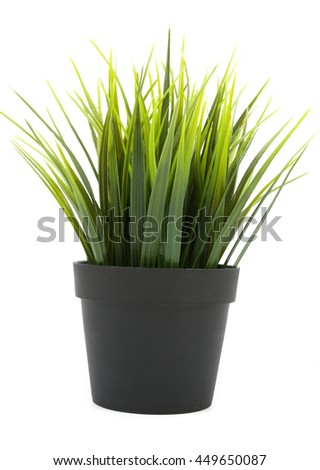 decorative grass in flowerpot isolated
