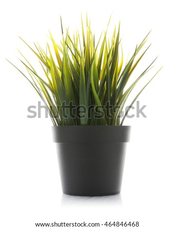 Decorative grass in flowerpot isolated on white background