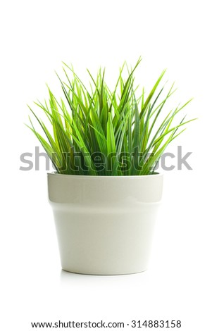 decorative green grass in flower pot on white background - stock photo