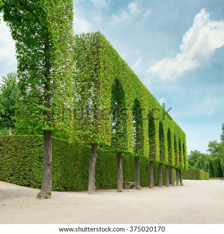 Decorative hedges in the park - stock photo