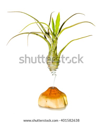 Decorative houseplant growing elevated above a log