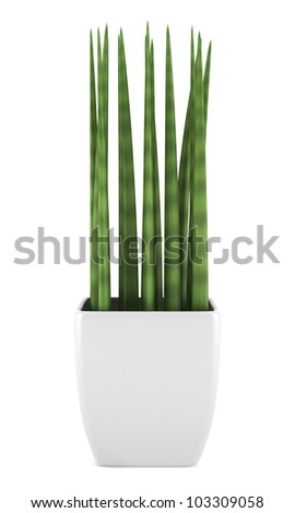 decorative houseplant in pot isolated on white background - stock photo