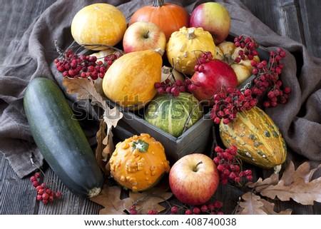 Decorative mini pumpkins and apples  - stock photo