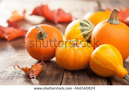 decorative mini pumpkins autumn leaves for halloween thanksgiving