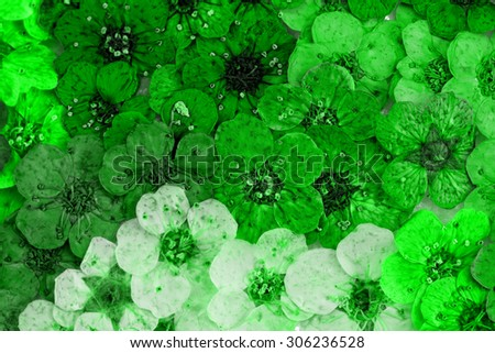 Decorative montage compilation of colorful dried spring flowers (green) - stock photo