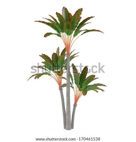 Decorative palm plant - stock photo