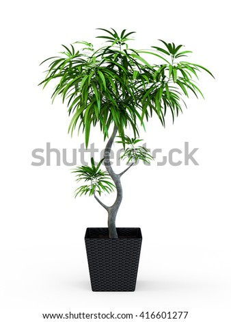 Decorative palm tree isolated on white background. 3D Rendering, 3D Illustration.