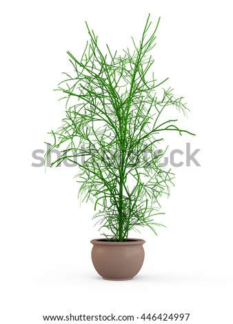 Decorative plant in a pot isolated on white background. 3D Rendering, Illustration.