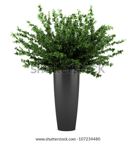 decorative plant in black pot isolated on white background - stock photo
