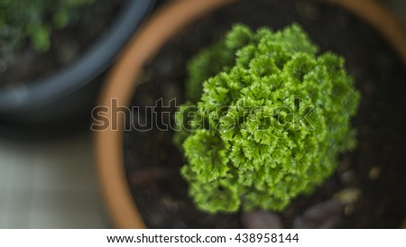 Decorative plant in flowerpot Decorative plant in flowerpot , soft focus, blurry - stock photo