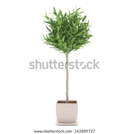 Decorative plant tree in the pot