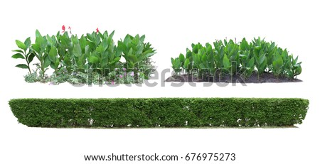 Decorative plants isolated on white