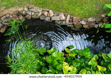 Pond stock images royalty free images vectors for Decorative pond fish