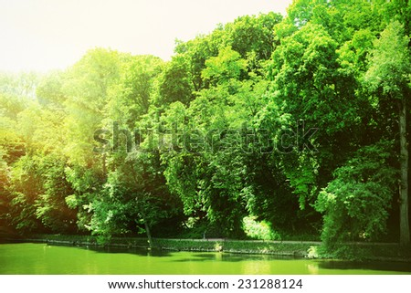 Decorative pond with plants in park - stock photo