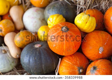 decorative pumpkin Stalks.
